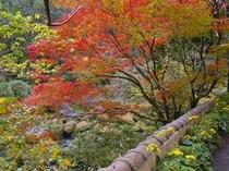 玄関前の鮮やかな紅葉
