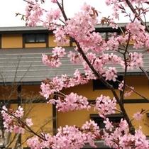 【外観】桜②