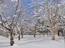【庭園・冬】大自然を感じられます。