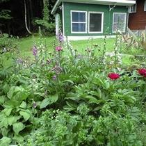 【ガーデン】初夏のガーデン♪