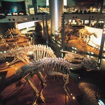 博物博物館の館内