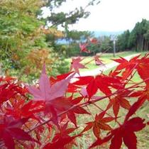 紅葉の季節には…