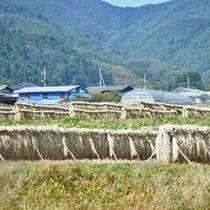 *昔ながらの製法で造られる減農薬コシヒカリ。のどかな田園風景が広がります。