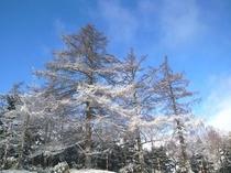 母樹林雪景色