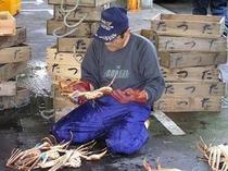 ★津居山がにを選別する漁師!!