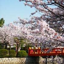 ■九華公園の桜
