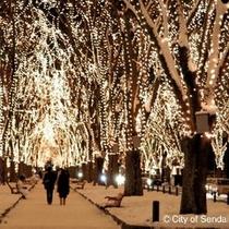 ◆冬◆SENDAI光のページェント☆定禅寺通りが温かい光に包まれます!