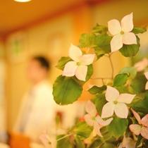 *【フロント前】やまぼうしの花(造花)がお出迎え