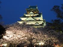 大阪城(天守閣)桜ライトアップ♪美しき大阪城!四季折々の風景なかでも西の丸庭園は梅林や桜が美しい。