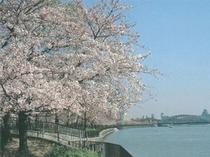 桜ノ宮周辺桜♪桜ノ宮公園!両岸に広がる並木道が桜色に染まり美しい川の景色が楽しめます。