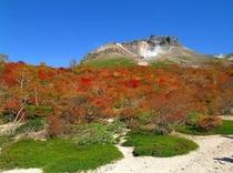 茶臼岳の紅葉2