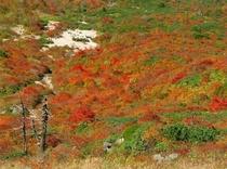 茶臼岳の紅葉3