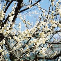 鷹巣荘前の桜
