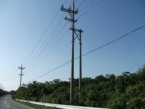 西表島の電柱