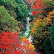 山中温泉観光名所【鶴仙渓】・秋景色 露天風呂からの眺望