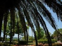 御荘公園の椰子