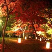 国営武蔵丘陵森林公園の紅葉見ナイト(11月中旬〜12月中旬)
