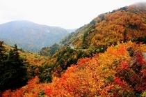 紅葉のスーパー林道
