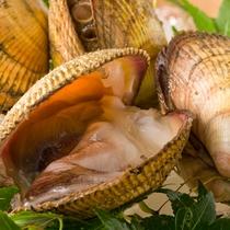 【食材一例】丹後トリ貝。日本一ともいわれる、通常の倍のサイズながらも、肉厚と柔らかさ