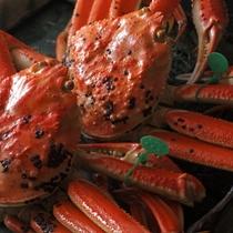 【冬】緑のタグが付いているのが、漁場に最も近い、間人漁港で水揚げされた蟹の印です。
