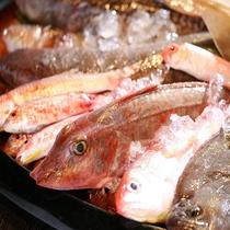 雑賀崎港で水揚げされた新鮮な、おさかな達。