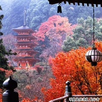 ■秋の長谷寺