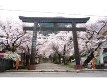 鬼怒川護国神社のソメイヨシノ【4月中旬頃開花】