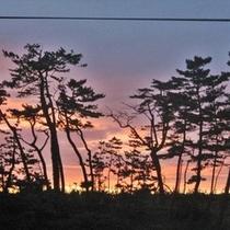 松並木の夕焼け