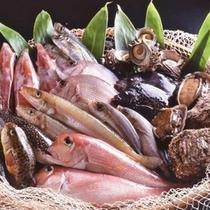 間人港で揚がるピチピチの地魚