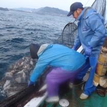漁師さんのお仕事に同行して、ほんまもんの定置網体験です。丹後だけの体験。