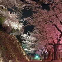 □懐古園 夜桜