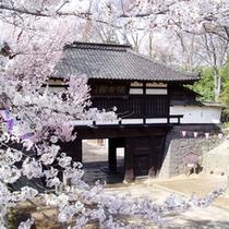 □懐古園の桜