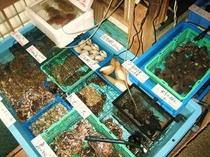 生簀、活き魚