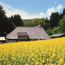 野沢菜発祥の地「健命寺」