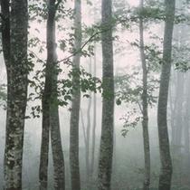 夏:高原で涼む。