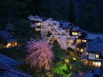 桜が咲き誇る中庭