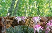 自然に囲まれた 綺麗で澄んだ蔵王温泉