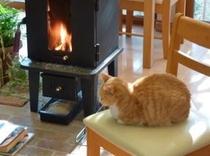 ペレットストーブと猫