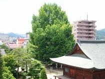 国分寺の大銀杏