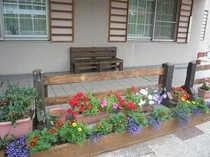 玄関テラスの花