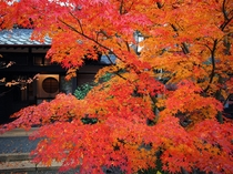 閑古錘の紅葉