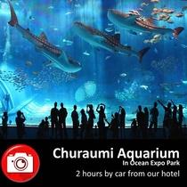 【美ら海水族館・海洋博公園】当館から車で2時間
