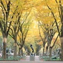 秋の定禅寺通り