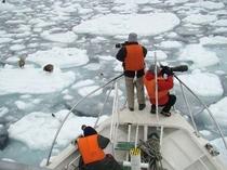 流氷の合間を突き進むクルーザー。羅臼は貴重な野鳥の宝庫です。