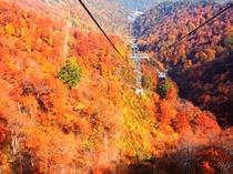 谷川岳ロープウエイ、紅葉の見ごろは10月上旬~中旬♪