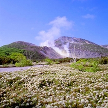 硫黄山の春