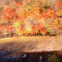 紅葉の美しいポンポン山