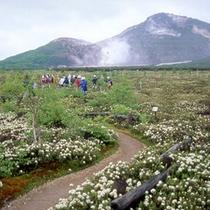 硫黄山春の散策
