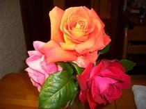 館内のバラには私が育てたバラ以外にもご近所のおすそわけも。心惹かれる姿、色です。