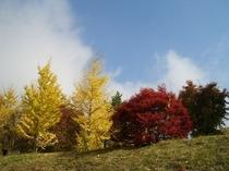 赤黄の木 かわいいです。10月ですね。私たちのビレッジの入口の丘です。眺めていると、ここはどこなのか